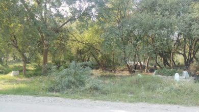 Photo of ریگی قبرستان میں جنگلی جانوروں، پرندوں کا کھلے عام شکار، کئی نسلیں معدوم ہونے کا اندیشہ