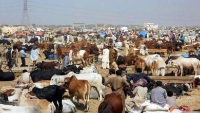 Photo of ملک بھرمیں مویشی منڈیوں کے اوقات صبح 6 سے شام 7 بجے تک رکھنے کا فیصلہ